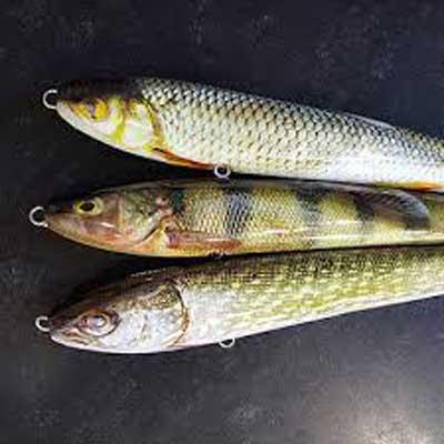jigskinz örjans fiske
